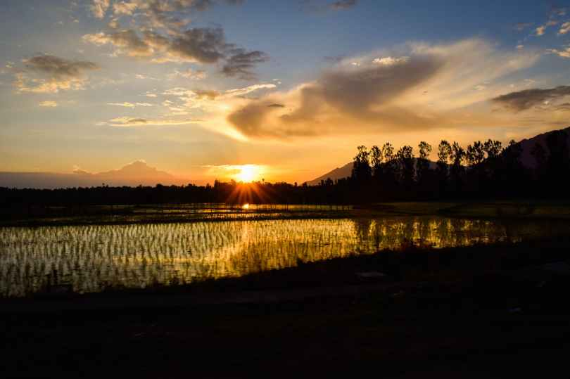 silhouette of rice fields under calm sky during golden hour